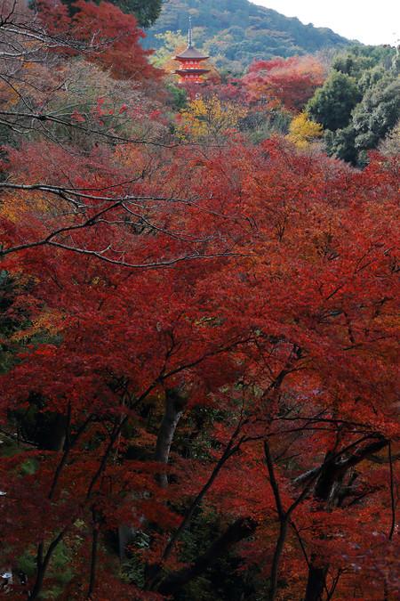Kiyomizudera1312081