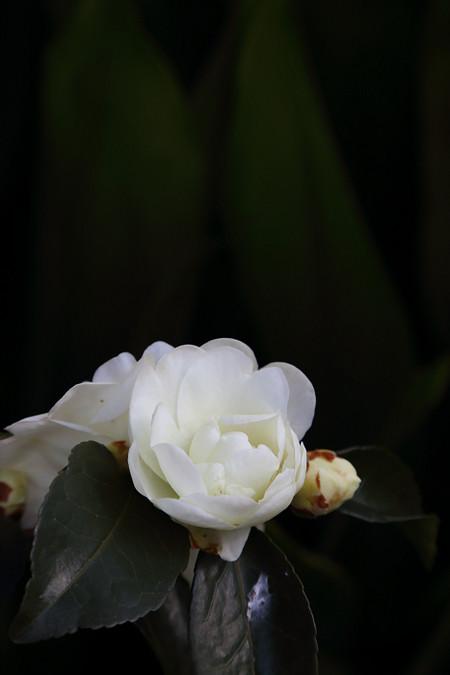 Kurodani1401087
