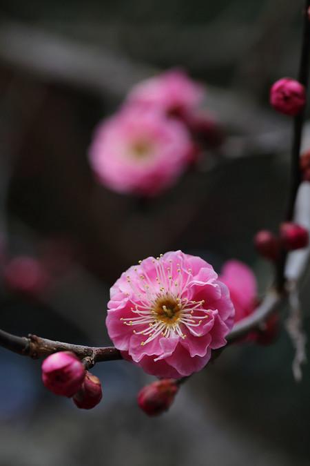 Kyotofuritusyokubutuen1402267