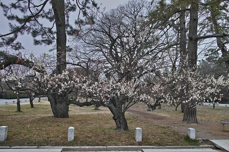Kyotogyoen1403073