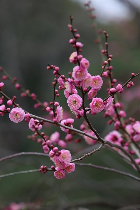Kyotogyoen1403076