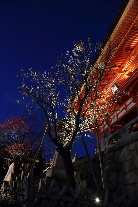 Higasiyamahanatouro1403227