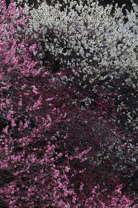Kyotofuritusyokubutuen1403182_2