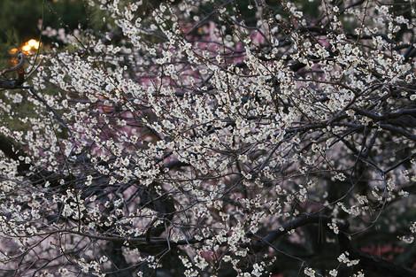 Kyotogyoen1403201