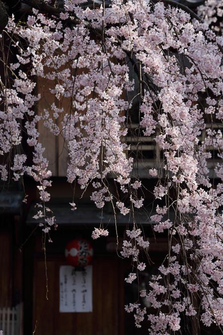 Gionsirakawa1404055