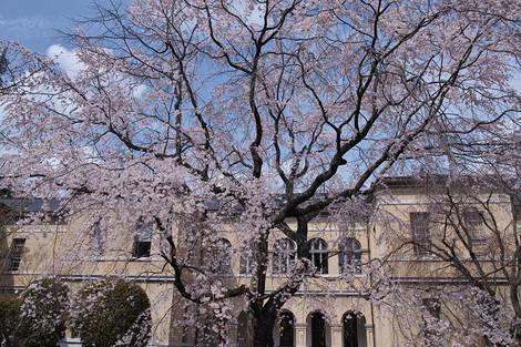 Kyotofutyou1404031