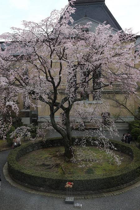 Kyotofutyou1404033