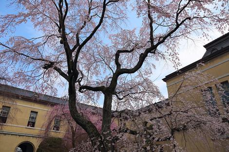 Kyotofutyou1404035