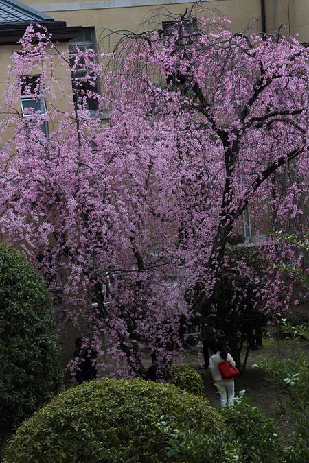 Kyotofutyou1404037