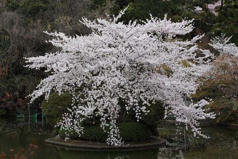 Ryouanji1404106