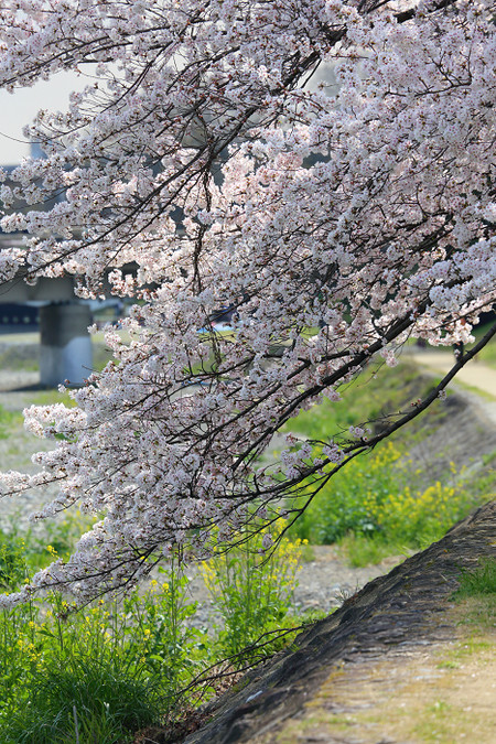 Takanogawa1414121