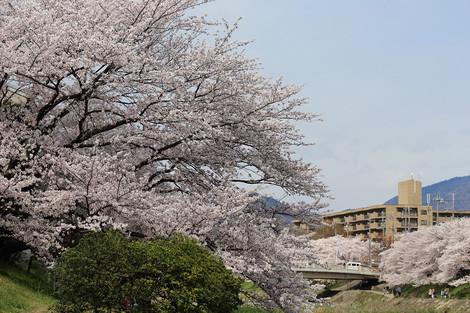 Takanogawa1414127