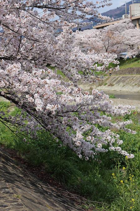 Takanogawa1414128