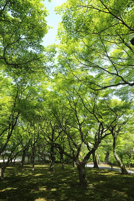 Toufukuji1405105