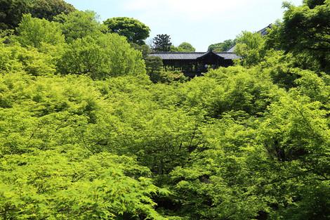 Toufukuji1405108