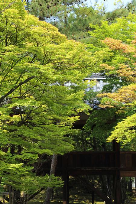 Seiryouji1405313