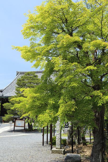 Seiryouji1405316