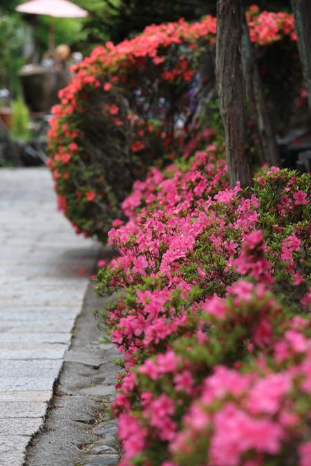 Maruyamakouen1406021