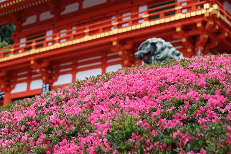 Yasakajinjya1406011