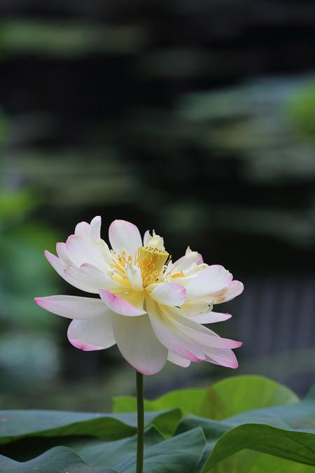 Syoukokuji1407101