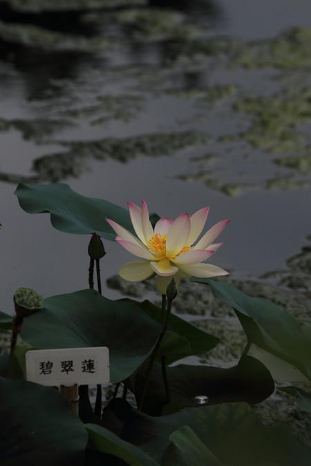 Syoukokuji1408086