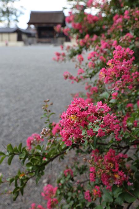 Kyotogyoen1409022