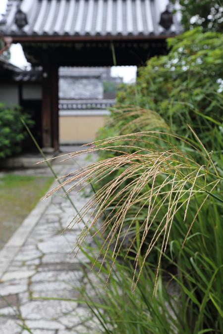 Ekouji1409111