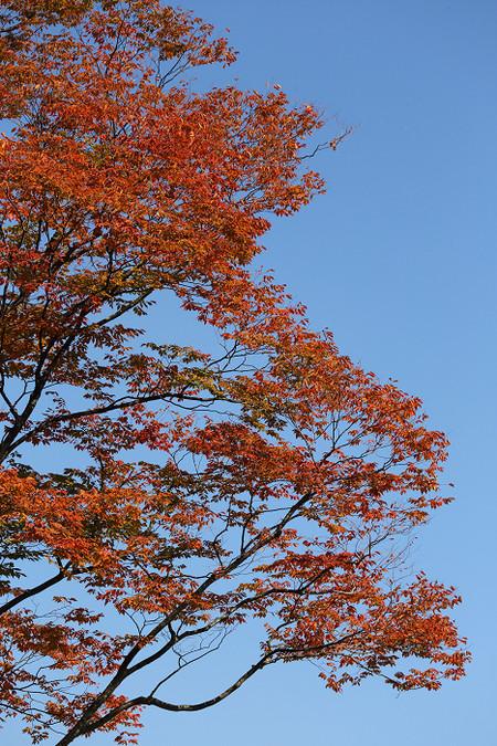 Kyotofuritusyokubutuen1410312