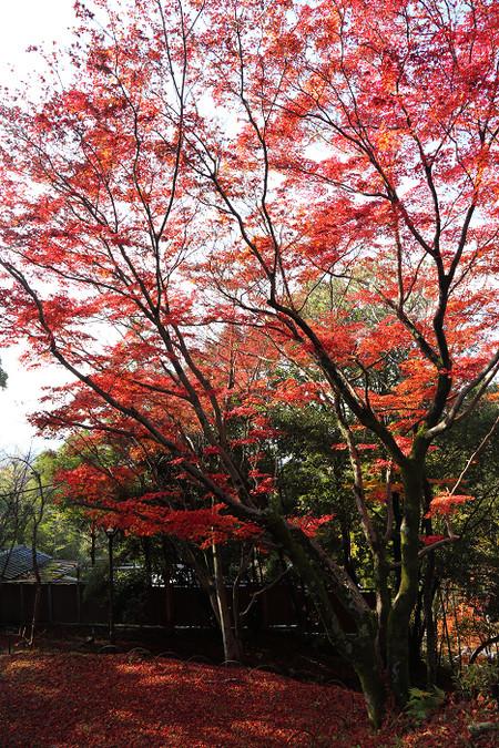 Maruyamakouen1412075