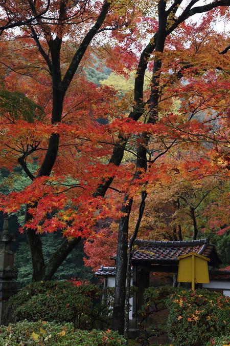 Seikanji1412051