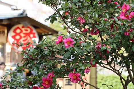 Kiyomizudera1501036