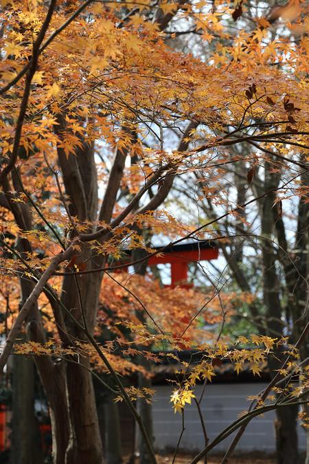 Tadasunomori1412301