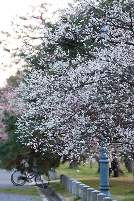 Kyotogyoen1501311