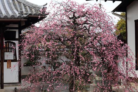 Yusyouji1501301