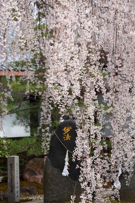 Honmanji1502141