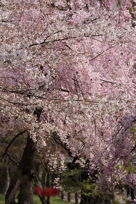 Kyotofuriotusyokubutuen1502123