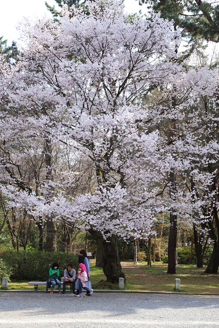 Kyotogyoen1502163