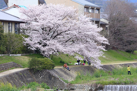 Takanogawa1502202