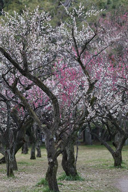 Kyotogyoen1503201