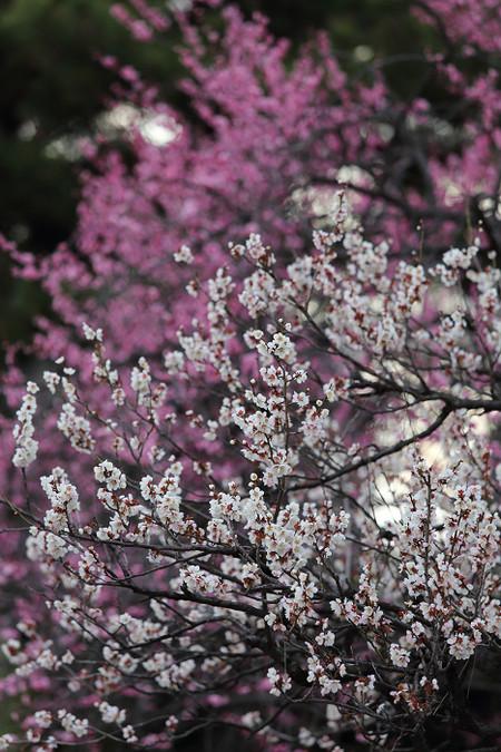 Kyotogyoen1503203