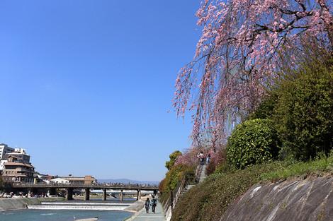 Kamogawa1504031