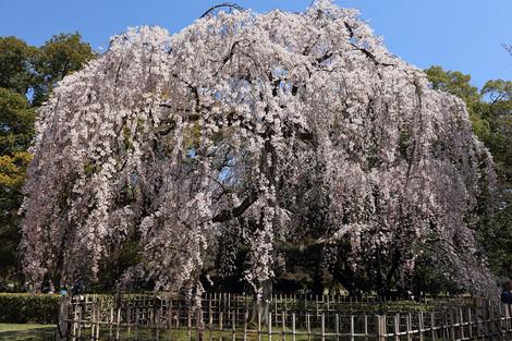 Kyotogyoen1504032