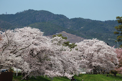 Kamogawa1504083