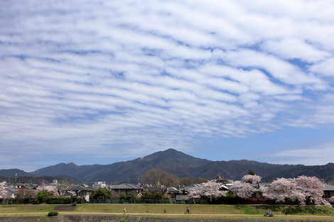 Kamogawa1504085