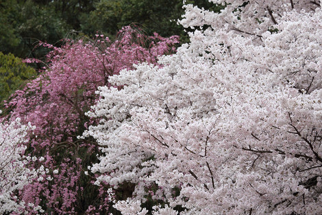 Kyotofuritusyokubutuen1504082