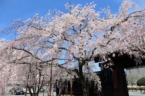 Myoukakuji1504072
