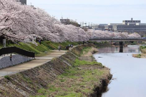 Takanogawa1504055