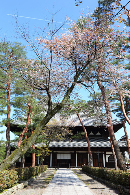 Syoukokuji1504161