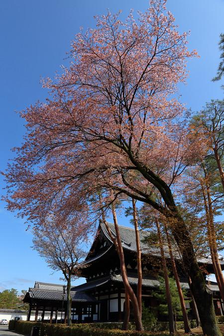 Syoukokuji1504162