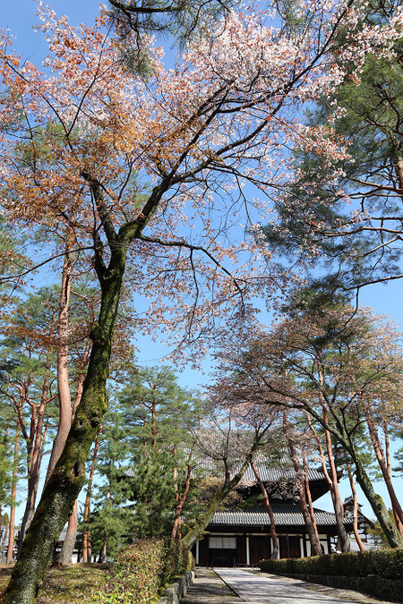 Syoukokuji1504165
